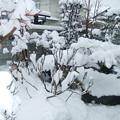 Photos: 雪の様子