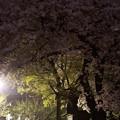 Photos: 200904不人気桜