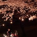 201004花を愛でる