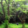 Photos: 201206森へ