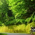 200708緑の壁
