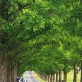 Photos: 201208-1ゼブラな道