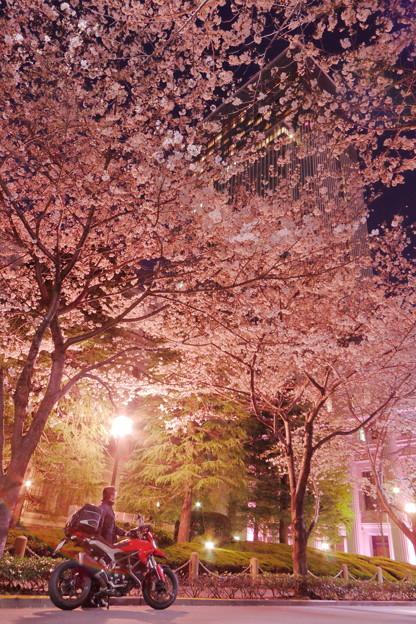 Photos: 201805-1_都会の桜