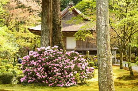 石楠花と往生極楽院