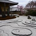 写真: 枝垂れ桜の奔龍庭