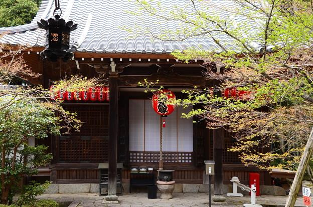 写真: 青モミジの赤山禅院