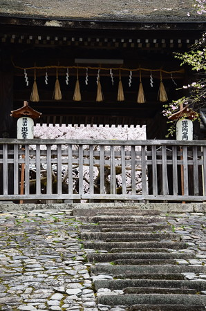 勅使門越しの枝垂れ桜