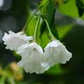 写真: 雨宿(アマヤドリ)