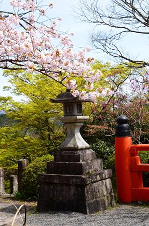 石灯籠と桜