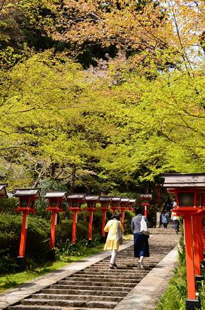 赤い灯篭ともみじの新緑と山桜