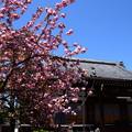 本堂前の関山(カンザン)