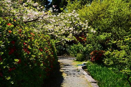 八重桜のアーチ
