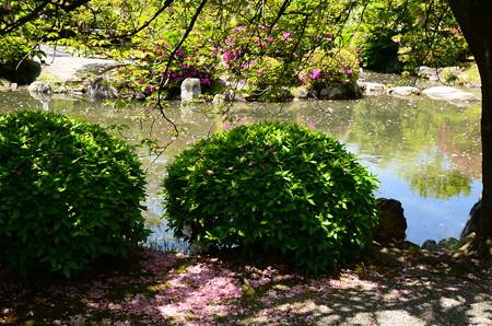 散り桜の情景