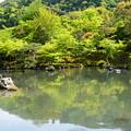 新緑を映す曹源池