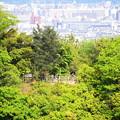 写真: 大悲閣から嵐山公園を望んで~