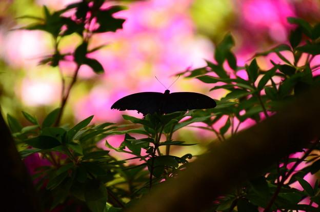 写真: 黒のシルエット