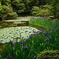 写真: 白虎池の杜若