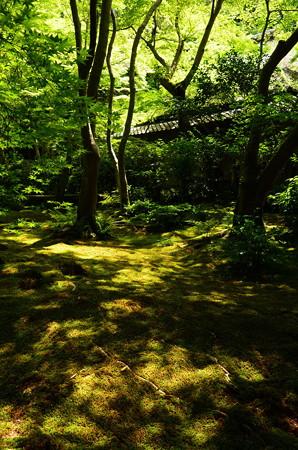 初夏の光の祇王寺