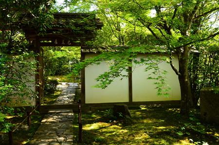 緑に染まる金福寺