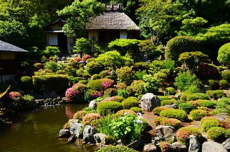 皐月の芙蓉池と清漣亭