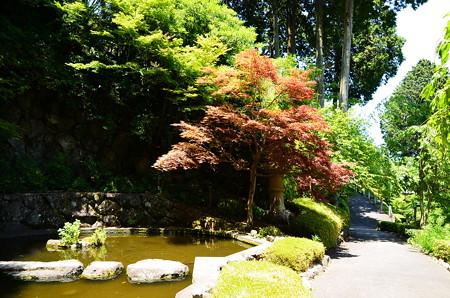 赤もみじの青蓮の滝