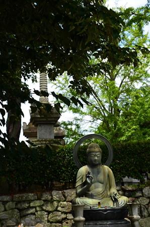 仏様の前の菩提樹