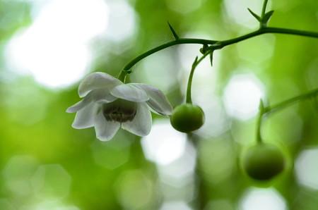 咲き始めました~~~