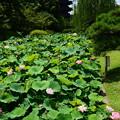 写真: 五重塔の前に咲く