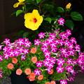 洛南会館の花