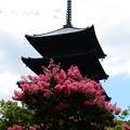 写真: 五重塔と百日紅(サルスベリ)