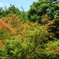 写真: 少し秋の気配~