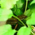 写真: 蜥蜴(トカゲ)