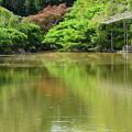 写真: 水面の彩