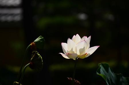 真夏の光と影
