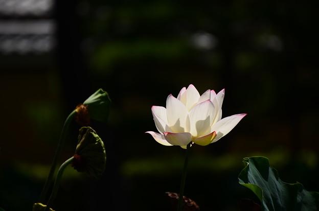 写真: 真夏の光と影