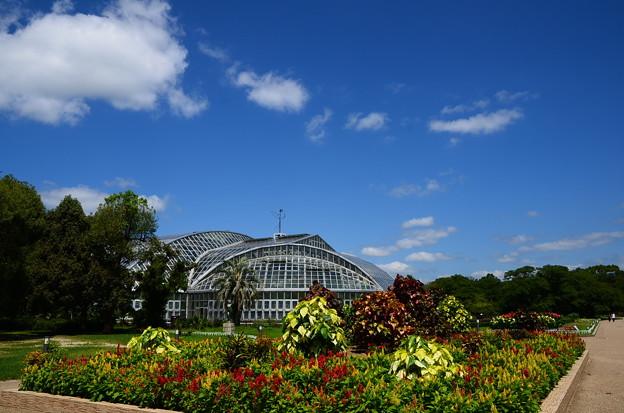 写真: 夏空の京都府立植物園
