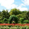 写真: 夏の植物園