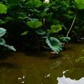 写真: 夏空の映る池面