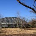 写真: 新しく植えられた染井吉野