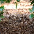 写真: 木陰でガサゴソしてるのは