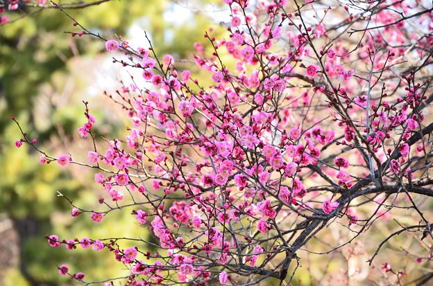 一足早く春~