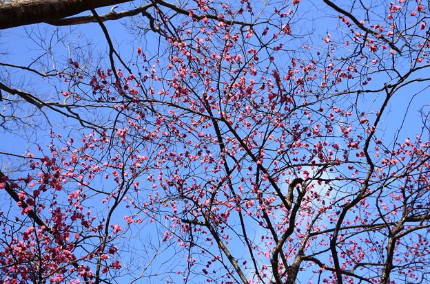 早春の空を染めて~