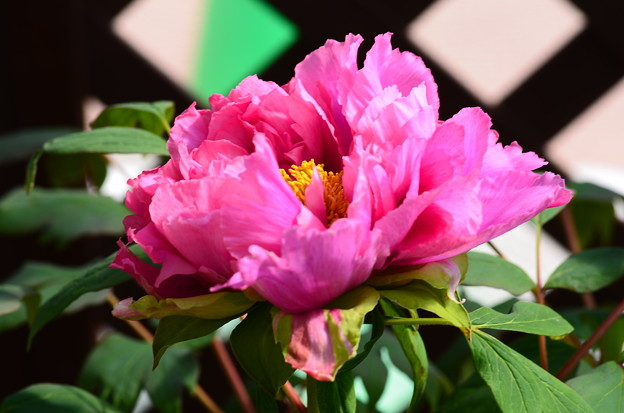 紫紅殿(シコウデン)