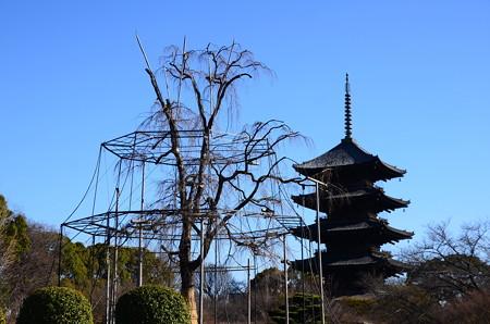 五重塔と不二桜