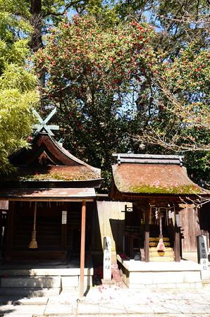 薮椿に包まれる宗像神社