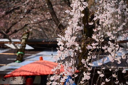 華やぎ始めた桜の宮