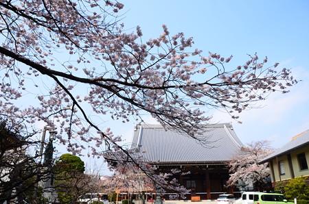 宥清寺の桜風景