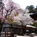 Photos: 宝積寺の桜風景