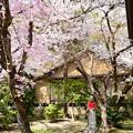 お地蔵様を包む桜