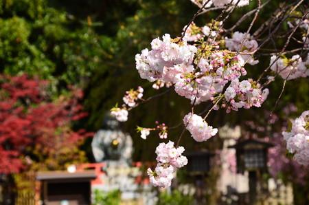 阿亀の像と松月(ショウゲツ)